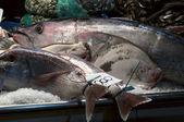 Meeresfrüchte-zusammensetzung — Stockfoto