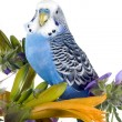 Parrot sits on a flower - Stock Photo