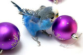 Parrot and fir tree new year's balls — Stock Photo