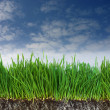Green grass and dark soil with roots - Stock Photo