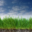 Stock Photo: Green grass and dark soil with roots
