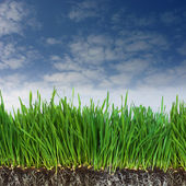 Green grass and dark soil with roots — Stock Photo