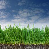 Grama verde e escuro solo com raízes — Fotografia Stock
