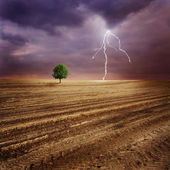 Lone tree and lightning — Stock Photo