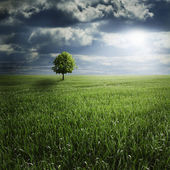 Lone Tree in Field with Storm — Stock Photo