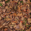 Texture of the fallen down leaves and apples — Foto Stock