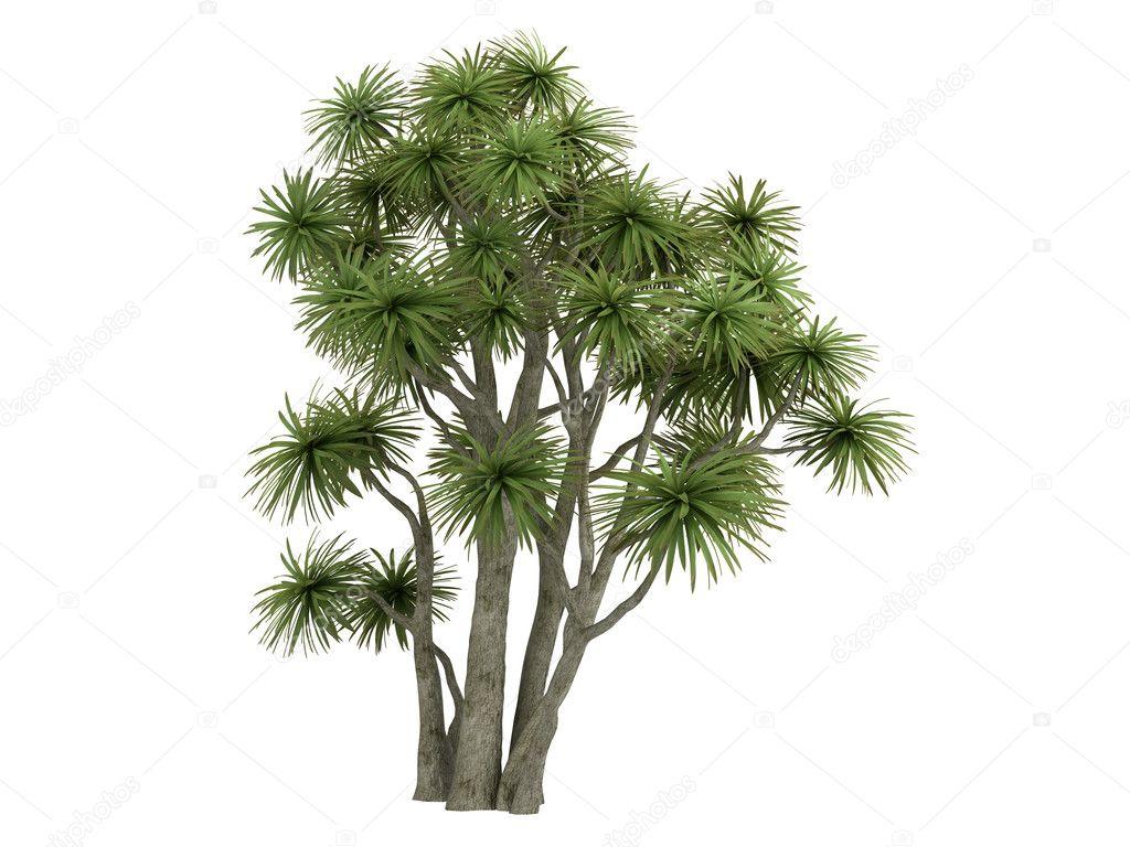 cabbage palm or cordyline australis stock photo nmorozova 5360513. Black Bedroom Furniture Sets. Home Design Ideas