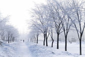 Foggy wintry morning in Saint-Petersburg — Stock Photo