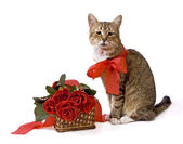 Cat and rose basket — Stock Photo