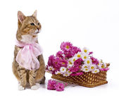 Cat near wild flowers basket — Stock Photo