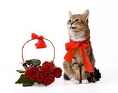 Cat near rose basket — Stock Photo