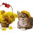 Cat lying near yellow flowers basket - Stock Photo