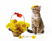 Basket of flowers and cat wearing a peaked cap — Stock Photo