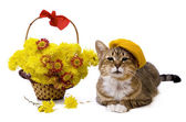 Cat lying near yellow flowers basket — Stock Photo