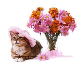 Cat lying near vase with flowers — Stock Photo