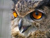 Stock owl — Stock Photo