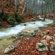 Woodland river stream - Stock Photo