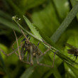 Spider And Fly — Stock Photo