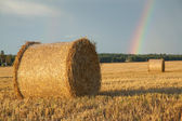 Large hay roll on the field — Stock Photo