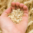 Royalty-Free Stock Photo: Full hand over harvest