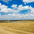 Rural view - Stock Photo
