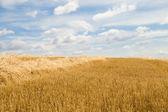 Cutting harvest — Stock Photo