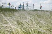 Pióro trawa — Zdjęcie stockowe