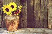 Sunflower still life. — Stock Photo