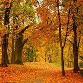 Valley in autumn park