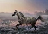 Running horse at Misty morning