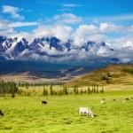 thumbnail of Mountain landscape