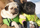 Two funny dog clothes
