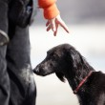 Постер, плакат: Dog and trainer