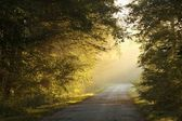 Rural way in misty autumn forest at sunrise