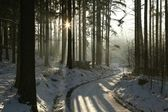 Winter coniferous forest at dusk