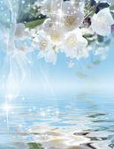 Sfondo magico - una fioritura gelsomino e lucenti stelle