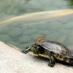 thumbnail of Tortoise