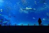 Akvarijní nádrž