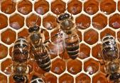 Tánc a méhek