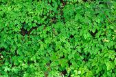 Vegetace v lese