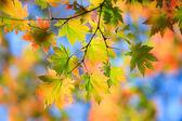 Autumn landscape.10