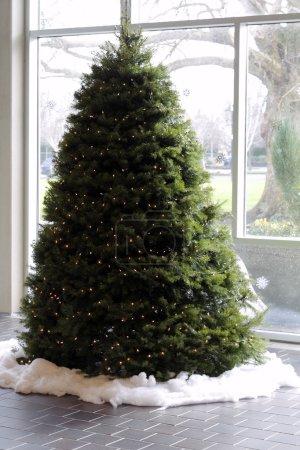 christmas, tree, in, daylight - B4648810
