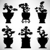 Bonsaje strom rostlina květináč