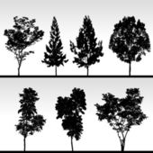 A set of isolated tree in silhouette vector