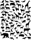 Collection of 68 animals - vector