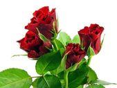 Rote rosen auf weißem hintergrund