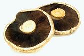 Pohled ze zadní strany houby portabella
