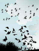 The silhouette of wild birds in the sky