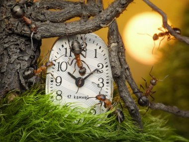 Team of ants adjusting time on clock, fantasy