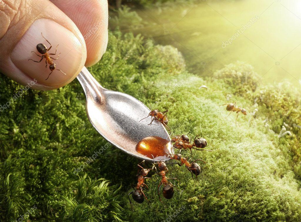 Human feeding ants